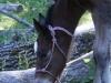 Derby Foal Rope Halter