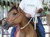 Keri Rope Horse Halter