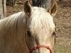 Midas Rope Horse Halter